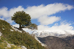 Mountain tree Royalty Free Stock Photo
