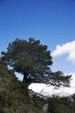 Mountain tree royalty free stock image
