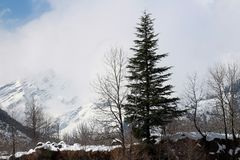Mountain and tree of Manali Himachal Pradesh Town in India. Manali is a high-altitude Himalayan resort town in India's northern Himachal Pradesh state. It has Royalty Free Stock Image
