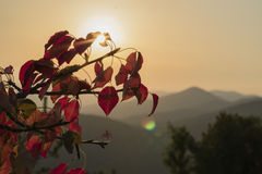 Mountain tree. Sunset, sky with no clouds and a mountain viewed behind red leave branches of a tree Stock Image