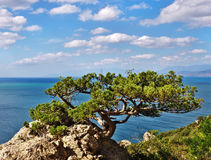 Mountain trees on the background of sea Royalty Free Stock Photo