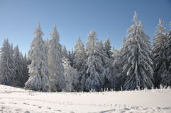 Mountain trees covered with snow. Trees covered with snow in Carpathian Mountains Royalty Free Stock Image