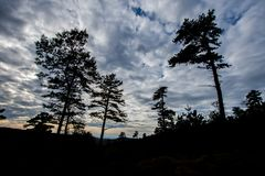 The Mountain Trees of Michaux State Forest in Pennsylvania in Fa royalty free stock image