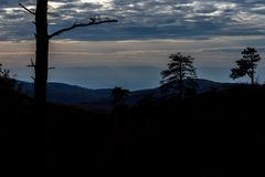 The Mountain Trees of Michaux State Forest in Pennsylvania in Fa royalty free stock images