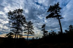 The Mountain Trees of Michaux State Forest in Pennsylvania in Fa royalty free stock photos