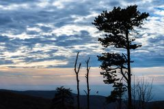 The Mountain Trees of Michaux State Forest in Pennsylvania in Fa stock image