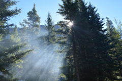 Mountain Trees with Sun Rays. Light Ray through Mountain Trees with camp fire smoke in Kananaskis country, Alberta, Canada Royalty Free Stock Images