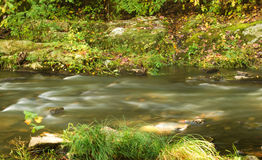 Mountain Trout Stream Royalty Free Stock Image