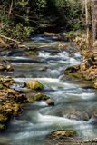 Mountain Trout Stream in Virginia Stock Image