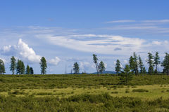 Mountain tundra. With several crooked trees Stock Photo