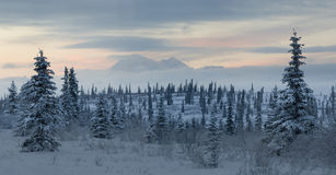 Mountain tundra landscape with Mt Denali Royalty Free Stock Photos