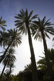 Mountain Tunisian oasis Royalty Free Stock Images