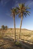 Mountain Tunisian oasis Royalty Free Stock Photography