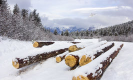 Mountain vale with logs. In winter Stock Image