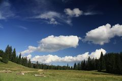 Mountain valley. Clouds and pine-trees in summer time Royalty Free Stock Images