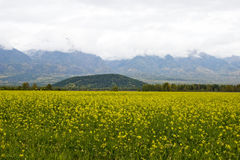 Mountain valley. Field of a yellow grass on a background of mountains Stock Photo