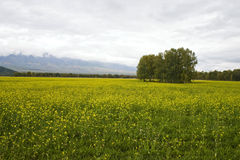Mountain valley. Field of a yellow grass on a background of mountains Stock Images