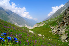Mountain valley. Jungles of colors in an alpine valley on Caucasus Royalty Free Stock Photo