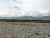 Mountain valley in Altai with a white horse rider Stock Photos