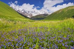 Mountain valley with blue flowers Stock Image