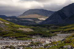 Mountain valley covered with thickets of cedar. Stock Photography