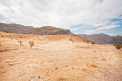 Mountain valley with the dry trees and sandy landscape in the Middle East Royalty Free Stock Images