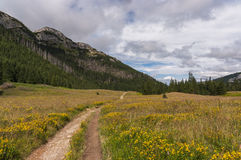 Mountain valley filled with flowers. Western Tatras Royalty Free Stock Photos