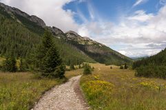 Mountain valley filled with flowers. Western Tatras Stock Images