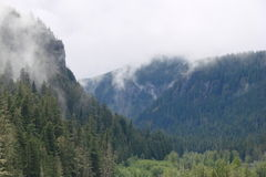 Mountain valley. Forested mountain valley covered in fog Royalty Free Stock Photo