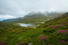 Mountain valley with lake and rhododendron flowers , cloudy moun Stock Image