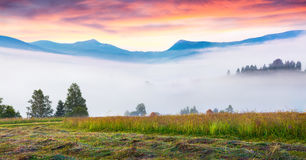 Mountain valley in the morning mist. Royalty Free Stock Photo