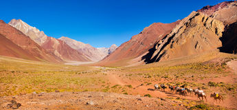Mountain valley panorama in the Andes with hikers trekking, Argentina, South America. Panoramic view of mountain valley in the Andes with hikers trekking royalty free stock photo