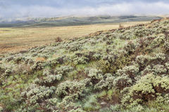 Mountain valley with sagebrush Royalty Free Stock Photo