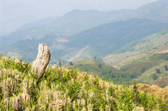 Mountain valley in Thailand. Overlooking a mountain valley in Thailand royalty free stock photography