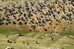 Mountain valley. View of the valley with trees from a great height Royalty Free Stock Photos