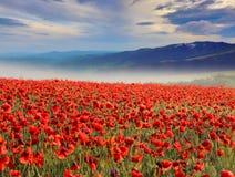 Mountain valley with wild poppy flowers Stock Photos
