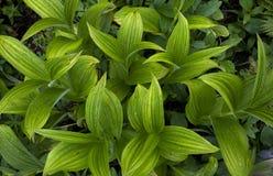 Mountain Vegetation Stock Images