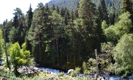Mountain vegetation of the Caucasus. Photo taken on: July 27 Saturday, 2013 Stock Image