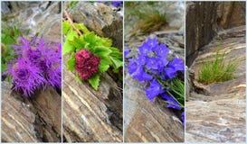 Mountain vegetation Stock Photography