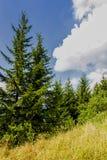 Mountain Vegetation. Deatil of mountain vegetation in Italy Stock Photos