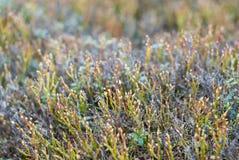 Mountain vegetation. Mountain meadow. Wild plants closeup. Stock Photos