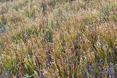 Mountain vegetation. Mountain meadow. Wild plants closeup. Royalty Free Stock Photo