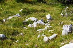 Mountain vegetation stones, sandstone and small flowers in grass Royalty Free Stock Image