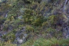 Mountain vegetation Royalty Free Stock Photo