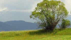 Mountain View Взгляд ландшафта гор стоковое изображение rf