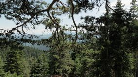 Mountain View в национальном парке Borjomi Kharagauli - Georgia сток-видео