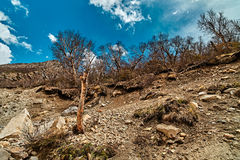Mountain View с деревом в Гималаях Стоковые Изображения RF