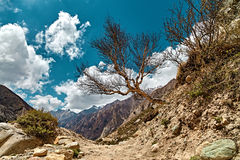 Mountain View с деревом в Гималаях Стоковое Изображение RF