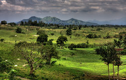 Mountain view. A beautiful view of a plantation near Tagaytay, Philippines Stock Photography