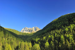 Mountain view. A view up a forested alpine valley in Switzerland to a mountain peak beyond. Space for text in the clear blue sky Stock Images